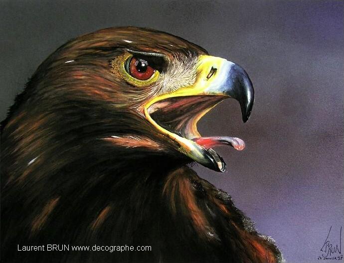 Aigles les rapaces - Dessin d aigle royal ...